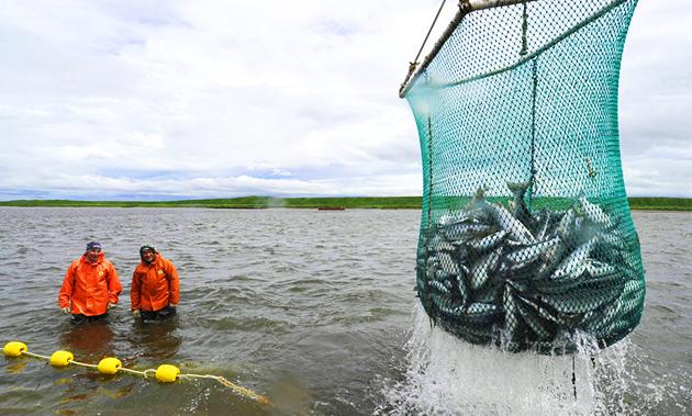 Добыча рыбы